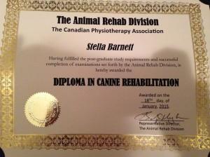 Diploma Canine Rehabilitation